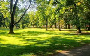 858x540 300x189 - 5 минут на природе – залог ментального здоровья