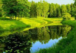priroda 250x175 - 5 минут на природе – залог ментального здоровья