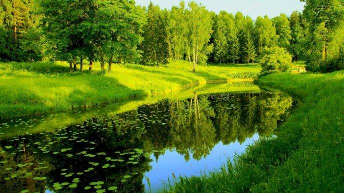 priroda - 5 минут на природе – залог ментального здоровья