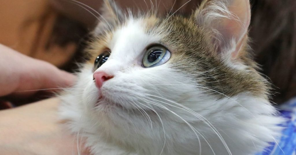 kotik 1024x538 - Живой подарок. Кому и в каких случаях можно дарить животных