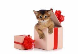 zhivoj podarok komu i v kakix sluchayax mozhno darit zhivotnyx 250x175 - Живой подарок. Кому и в каких случаях можно дарить животных