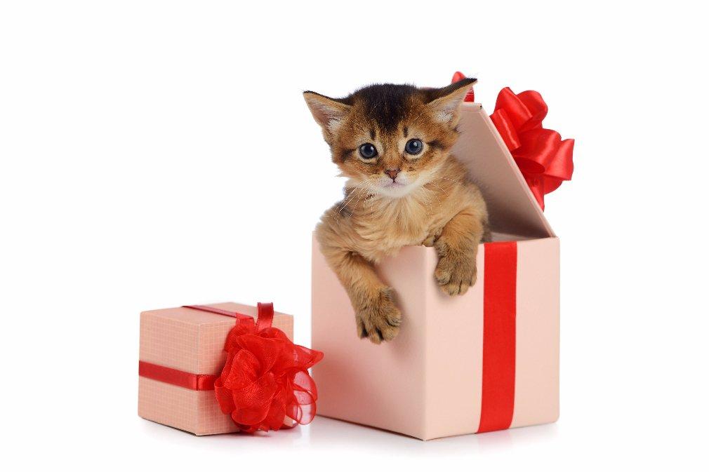 zhivoj podarok komu i v kakix sluchayax mozhno darit zhivotnyx - Живой подарок. Кому и в каких случаях можно дарить животных