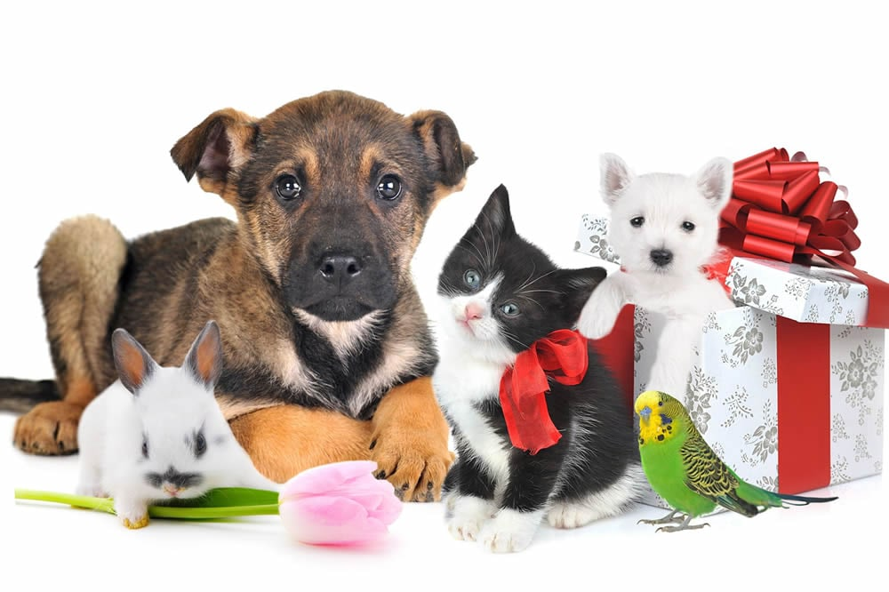 zhivoj podarok na prazdnik stoit li darit zhivotnoe - Живой подарок на праздник. Стоит ли дарить животное?